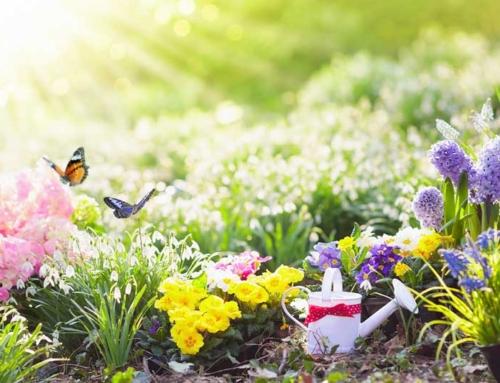 Die Gartensaison startet!