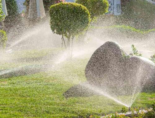 Bewässern Sie Ihren Garten jetzt unbedingt richtig